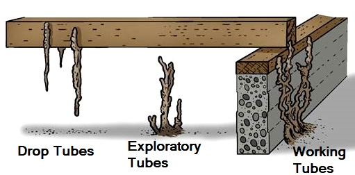 Different Types Of Termite Mud Tubes